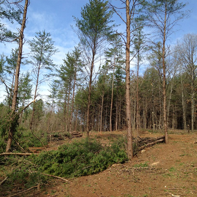 Georgia timber harvesting, pine and hardwood thinning, and
